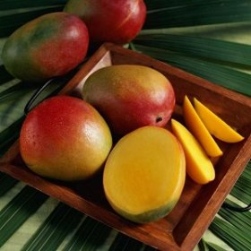 Как вырастить манго из косточки. Пошаговая инструкция